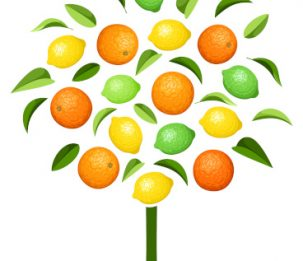 19913993 - abstract tree with various citrus fruits.